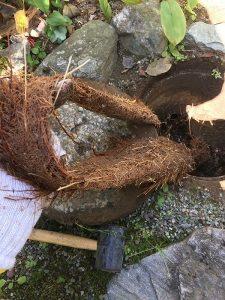木の根を引きずり出す