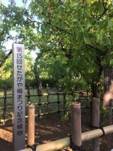 世田谷区の羽根木公園