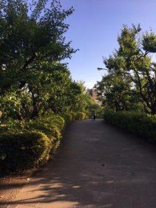 世田谷羽根木公園の散策道