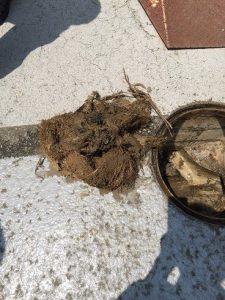 引き抜いた木の根