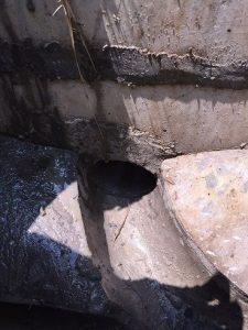 植物の根を除去した後の排水桝